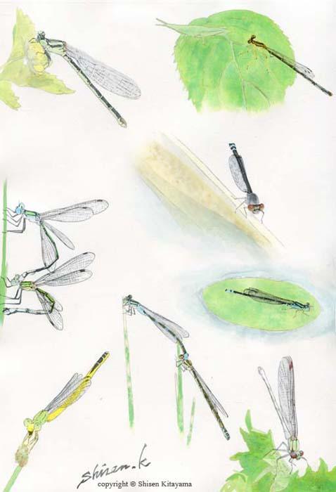real_dragonflys