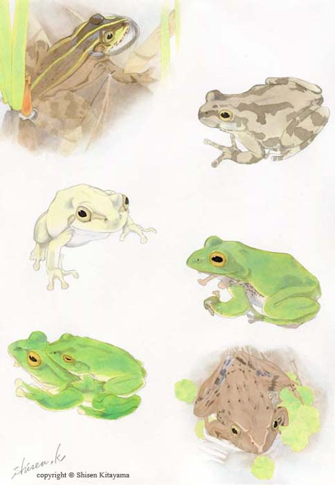 real_frogs