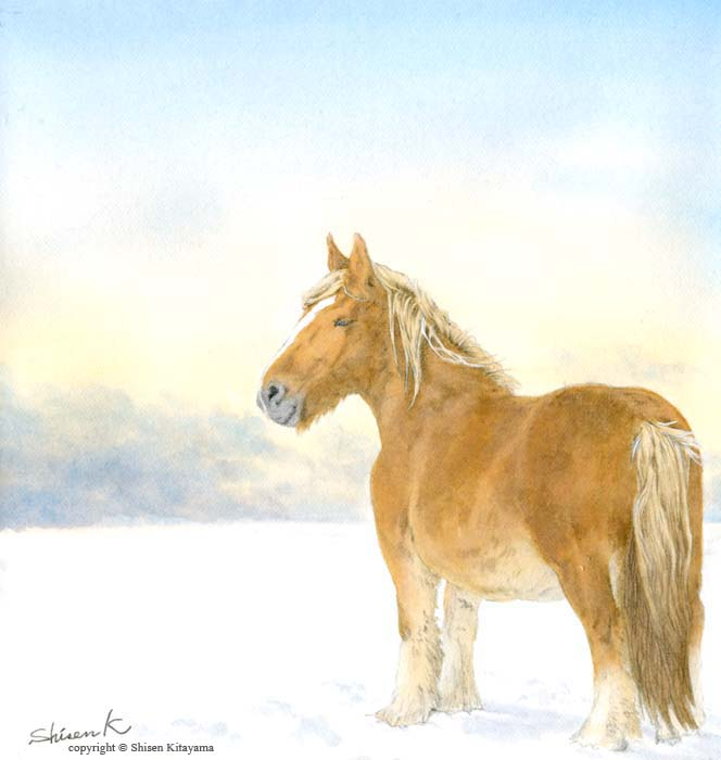 real_horse01