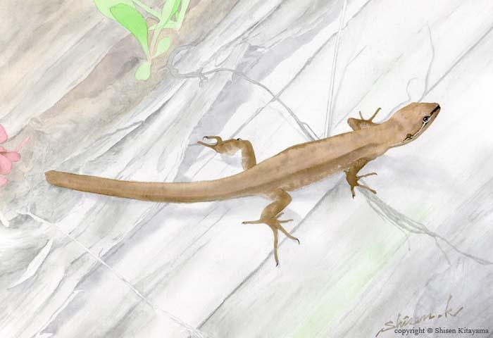real_lizard