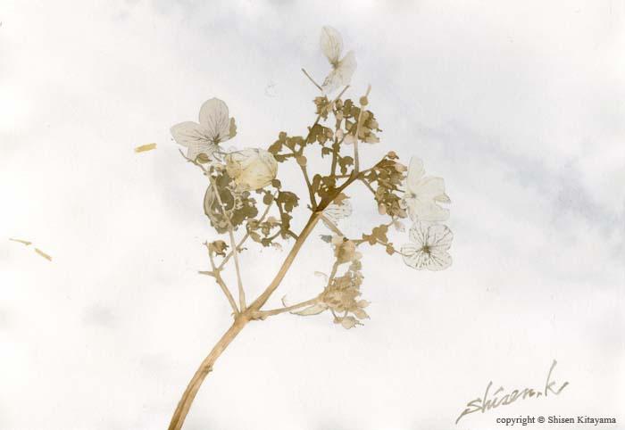 real_snowflower