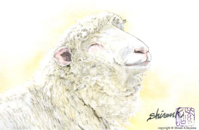 real_sheep1