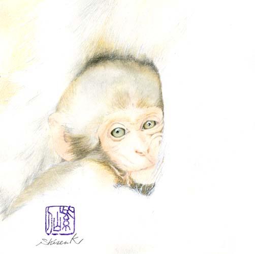 japanese monkey3