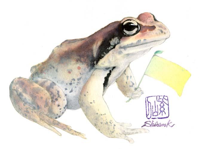 real_hokkaidofrog